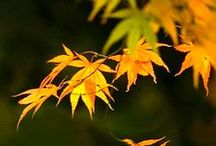 Embracing Fall