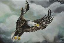 Aquila (Ørn)