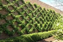 My Secret Garden / Gardening, flowers, Garden clubs, annuals, perennials