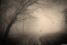 Mystic Magic Wonders / by Rebecca Altamirano