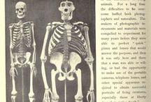 comparative Anatomy