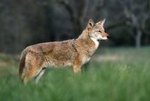 Animals You Will See In The Smokies