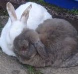 The Bunnies / Buns I Love - Mine and Others