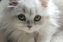 Yavru Kedi-Köpek / Kittens-Puppies