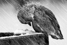 Yağmur / Rain