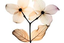X-ray Çiçekler / X-ray Flowers