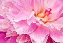Flowers / by Ângela Simon