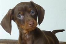 Animals & Pets / Aren't they all so cute?  / by Joy Van Wyngarden