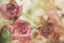 Pretty Pastels / by Sherry Littlejohn