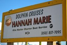 Find Dolphins on the Emerald Coast / by Resorts of Pelican Beach