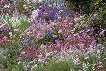 Flora / by Nancy Broadbent