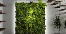 Green Wall Axis Mundi