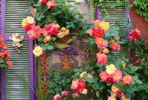 Roses Deserve a Board of Their Own! / by Rebecca Hollowell