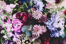 Garden + Flowers