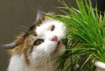 Cats ~ Cats ~ Cats