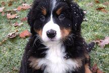 My Daisy / My Doggy love Daisy