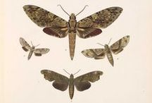 Creatures of the Night   Moths
