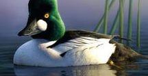 John James Audubon and Other Birds / Bird and Audubon collection.