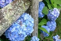 Garden Ideas / by Eco-Office Gals