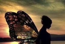 moths and butterflies / flying beautiful