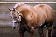 horses / by Leah Pfeffer