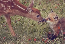 LOVE IS LOVE... / by Pat Cupp