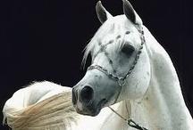 Animals & spirit.....