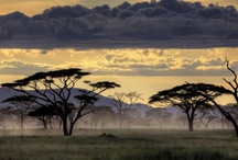 to love africa