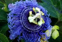 MIS FOTOS DE FLORES  http://laurelytomillo.blogspot.com.es/search/label/Flores
