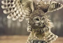 Owls......:)