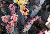 Plants / by April Jones