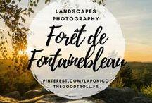 Forêt de Fontainebleau / Forêt de Fontainebleau, Seine et Marne, Île de France : outdoor et trail.  French forest near Paris