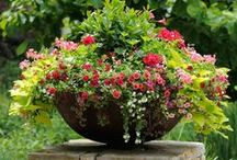 Creative Container Gardening / Container gardening is a fun, creative garden outlet  that can be enjoyed by virtually anyone. Container gardens can be grown in confined spaces like courtyards, patios, decks, balconies, and even screened-in porches or sun rooms.  With carefully selected plants, container gardens or planters can also be grown in a variety of light conditions, from full sun to partial sun, or even full shade.