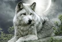 Wolf Love / by ✨Cynthia