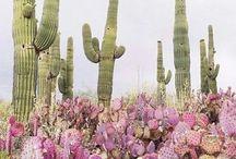 cactus + plant / cactus, succulent, plants, modern, boho, decorating with plants, creative, plant lady