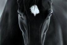 Love Horses / by Terry Ruiz