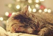 Feliz {Navidad}