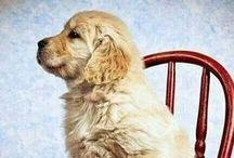Puppies! etc. / by Allyson Pellissier