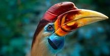 BIRDS / The most gorgeous birds on planet Earth