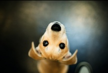 CUTE ANIMALS / Selection of lovely cute animal photography and prints. Some of them are for sale and some are just to make you smile.