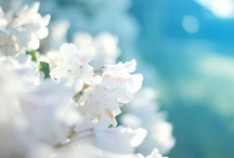 FLOWERS / Beautiful floral inspirations (Photography).