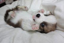 How Cute / cute. lil. things.