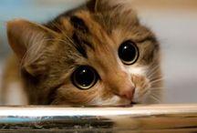 Cute Animals / by Tess C H.