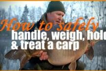 Carp Fishing Videos / Captures of the big carp and monster catfish from Beausoleil French Carp and Cats