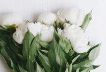 PRETTY FLOWERS. / flowers