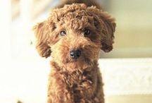 Puppy L♡ve