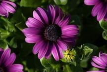 color mine Purple