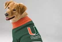 Hurricane Pets / Canes gear for your furry friends  / by Miami Hurricanes