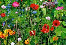 Garden Inspiration / Ideas for our garden