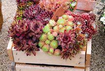 Garden Projects / Bug hotels, bird feeders, growing veggies creatively